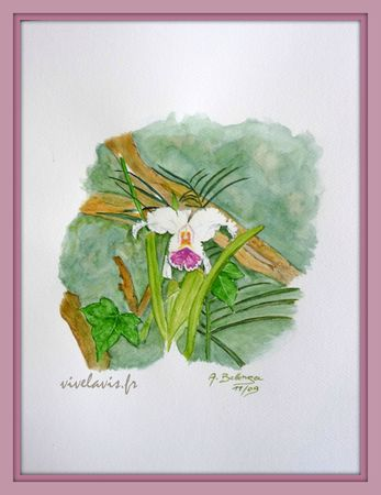 60 - Orchide_Novembre 2009