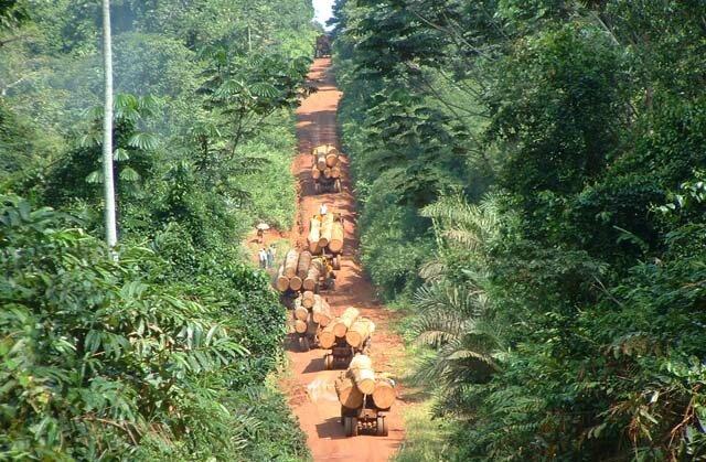 Danzer et la forêt congolaise