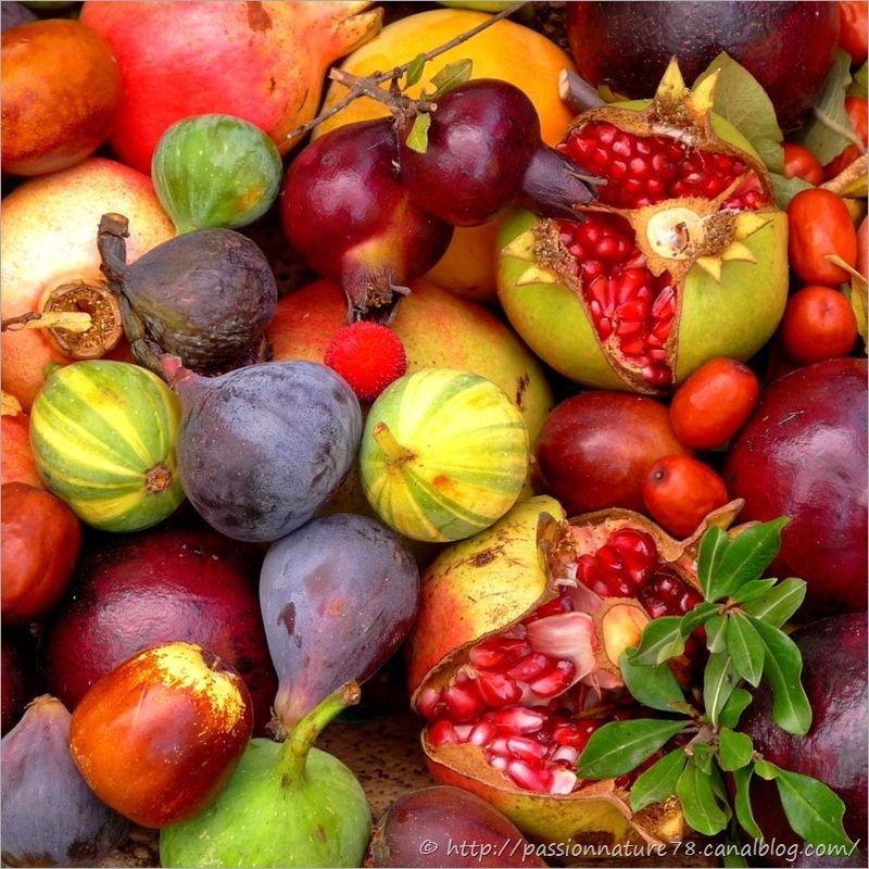 Fruits exotiques (33)