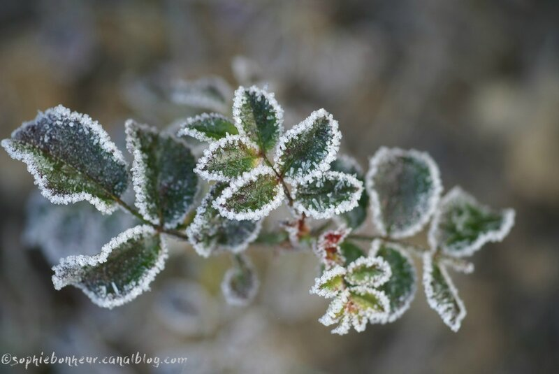 froid givre