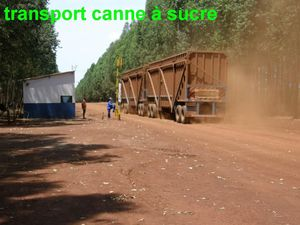 2_transport_canne___sucre