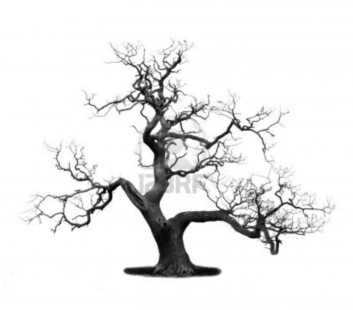 un arbre l 39 cole du frangipanier de luang prabang. Black Bedroom Furniture Sets. Home Design Ideas