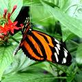 Graphisme des papillons