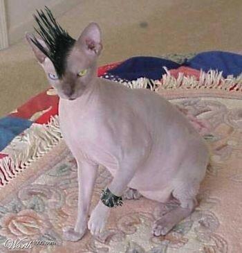 haircathh1
