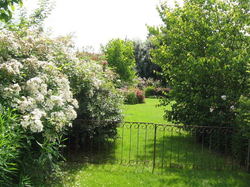 les jardins de roquelin val de loire album photos mon jardin de roses anciennes. Black Bedroom Furniture Sets. Home Design Ideas