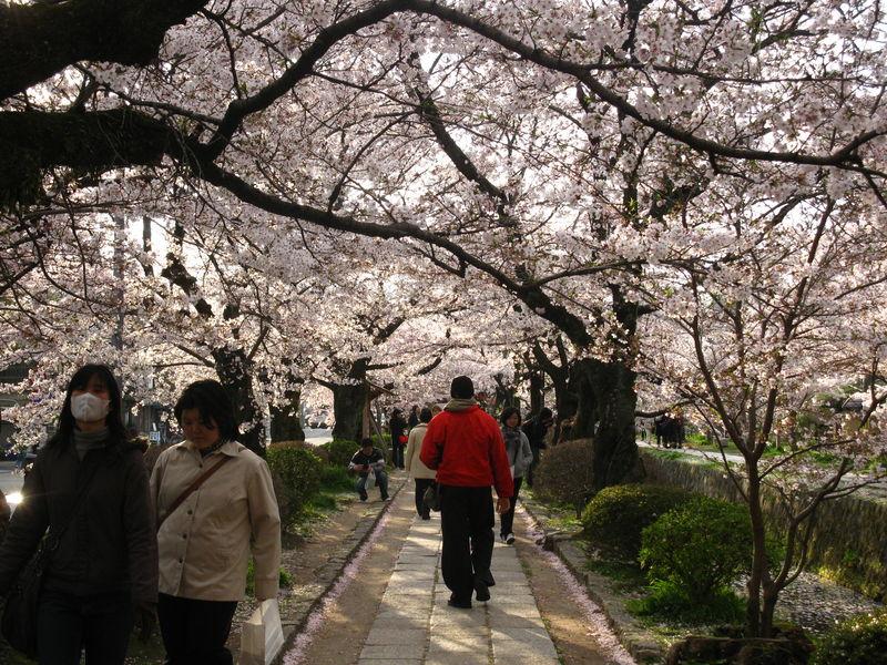 Le chemin du philosophe à Kyoto