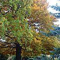 mon arbre énergie