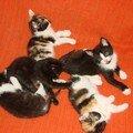 2008 04 22 Cinq petits chatons, un seul réveillé