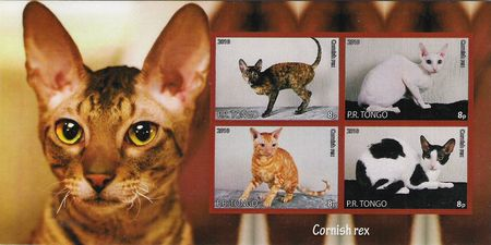 cornish_rex