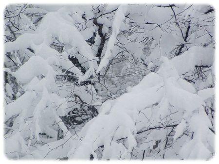 Neige_19_decembre_2010_011