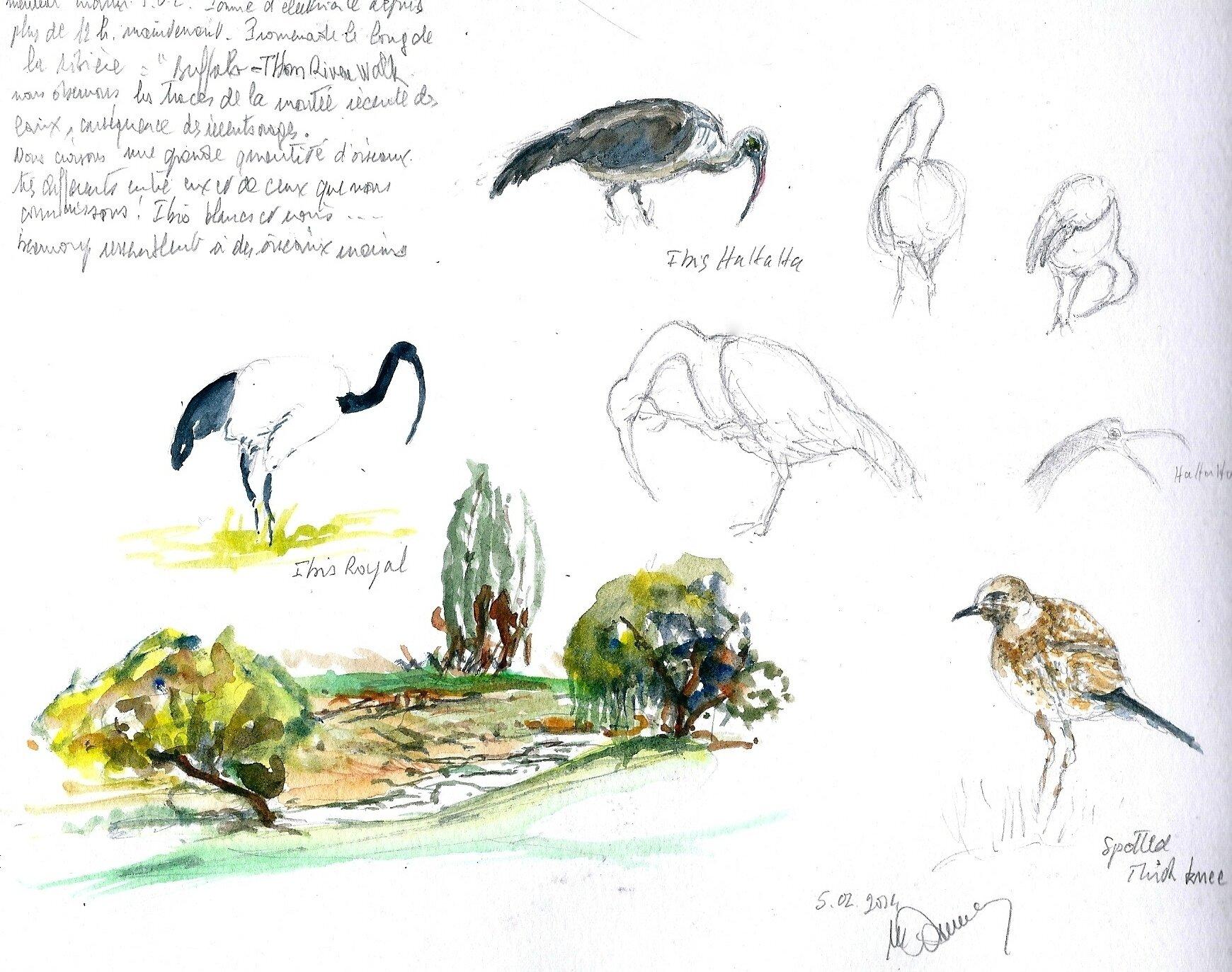 quelques oiseaux d' A du sud