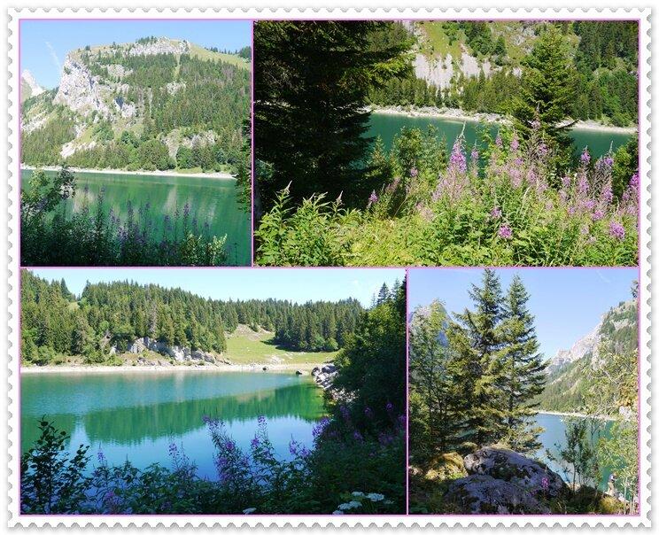 08 fleurs sur le lac