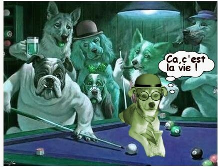 chiens_billard_tom_bulle