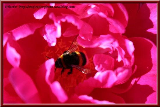 Au_coeur_de_la_fleur