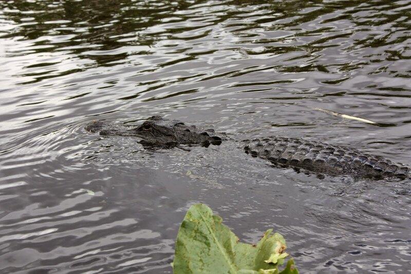 J24 - 21 juillet 2014 Everglades (139).JPG