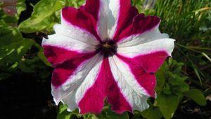 Fleurs012 (44)