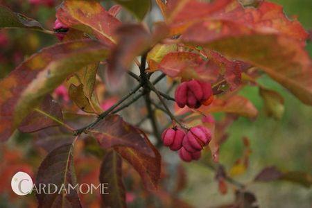 automne06
