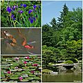 Japanese Garden Seattle 2