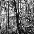 Printemps forestier