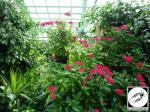 Jardin des papillons Hunawihr 16