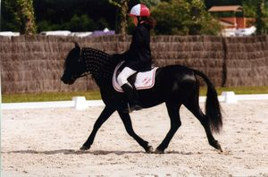 Jason dressage Lamotte