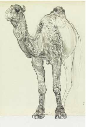 Eduard-Wiiralt-dessins-03