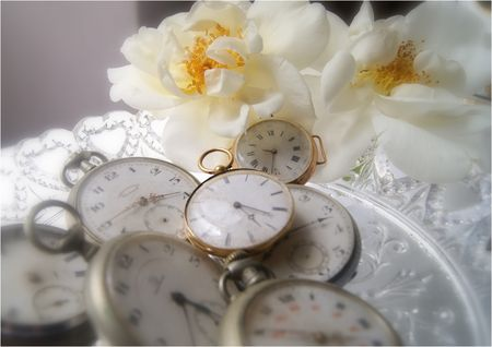 2011_05_14_roses14