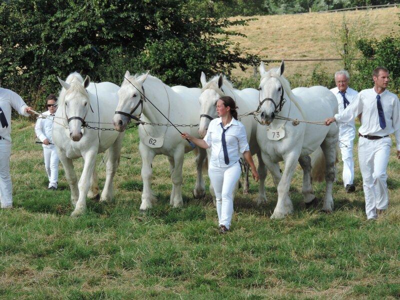 Rose du Marais, Aurore du Marais 2, Cerise duMarée deTer et Tamara du Marais - 24 Juillet 2016 - National Boulonnais - 5e (Lot de Bande)
