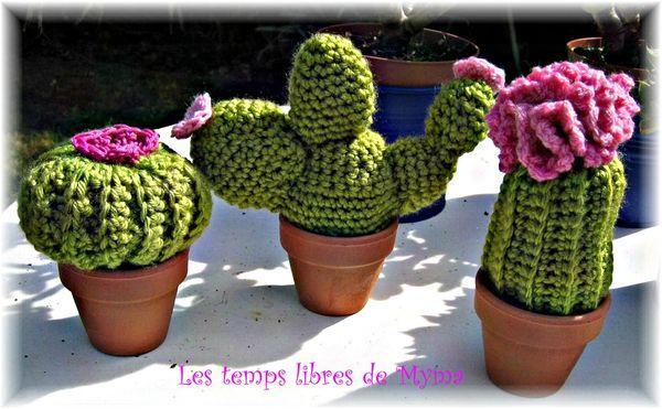 Cactus arugumi1