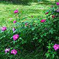 Jardin de la Source 12061652