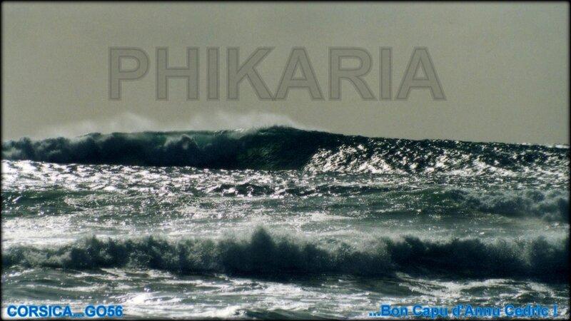 PHIKARIA_MAIORI