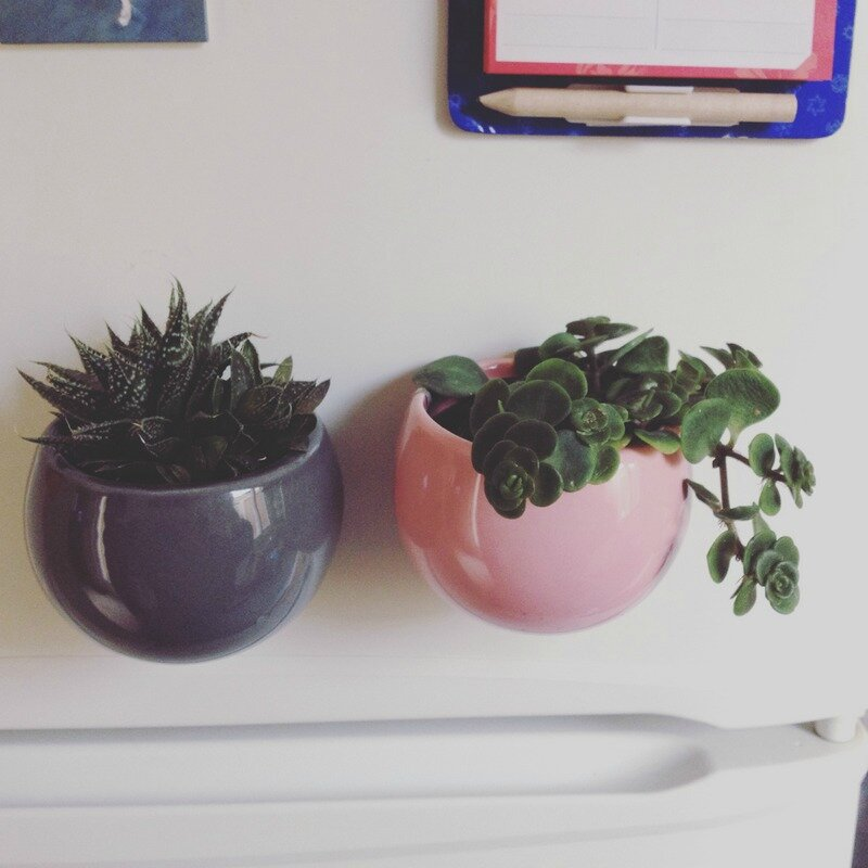 Succulentes Frigo