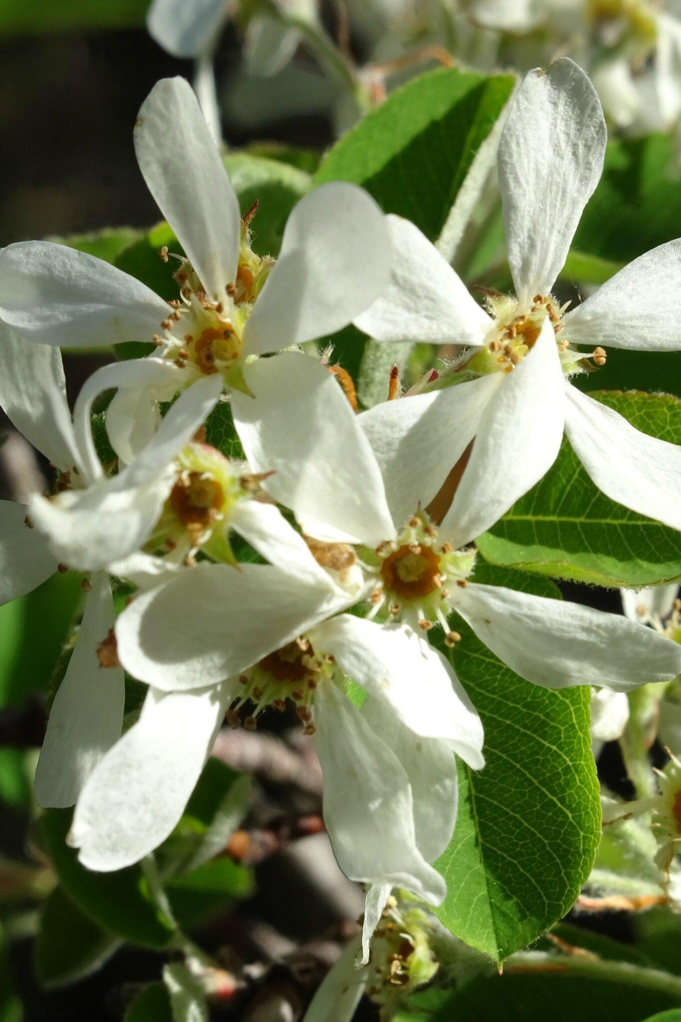 Plantes prot g es tous les messages sur plantes for Tous les plantes