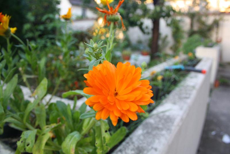PLANTATIONS3