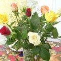 Roses de Gréoux