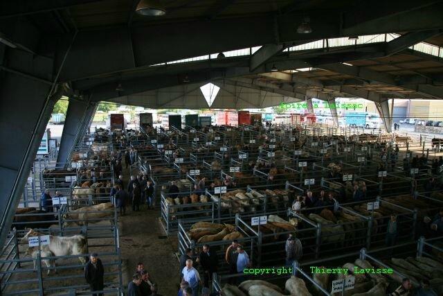 marché aux bestiaux à Laissac