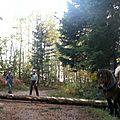Novembre 2013 – débardage en traction animale à semnoz (haute savoie)