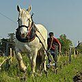 Rémi sédès, vigneron en coteaux d'ancenis (44)