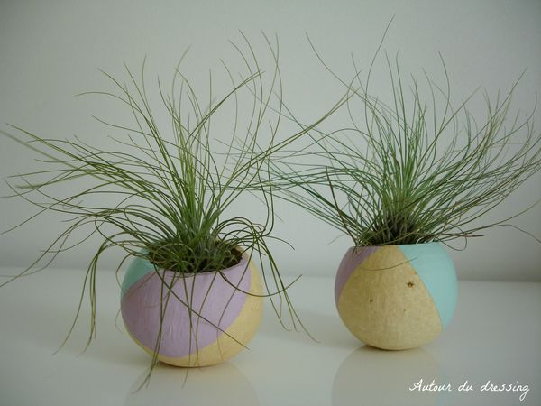 DIY Tillandsia filles de l'air 3