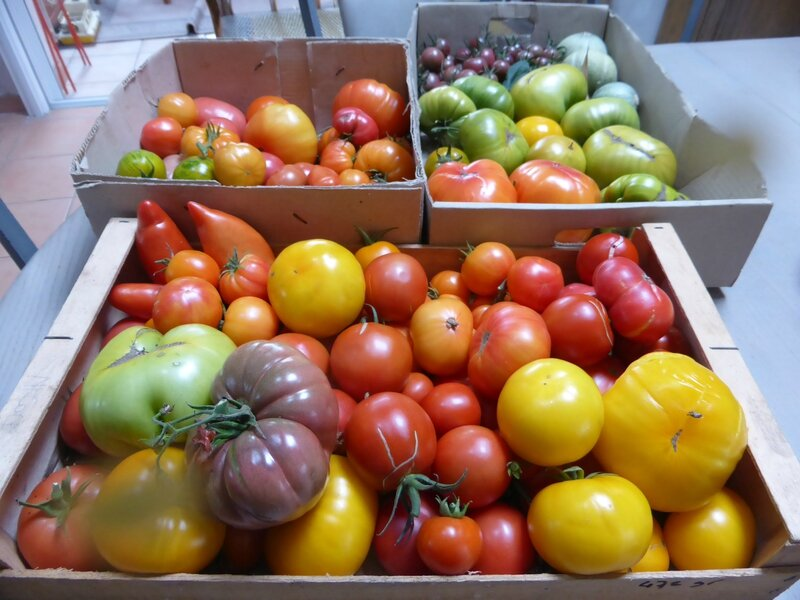 22-tomates (5)
