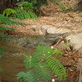 Et les crocodiles
