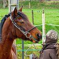 Stage équitation et locomotion du cheval avec Laurent Mézailles
