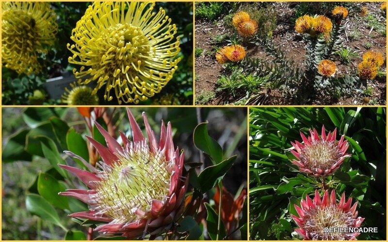 2017-10-09 jardin botanique
