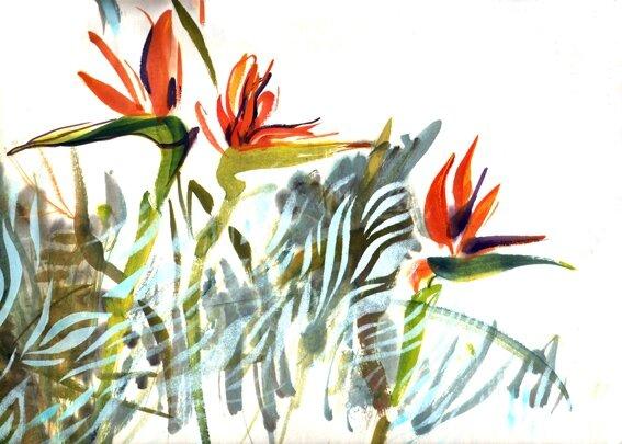 oiseau-paradis2