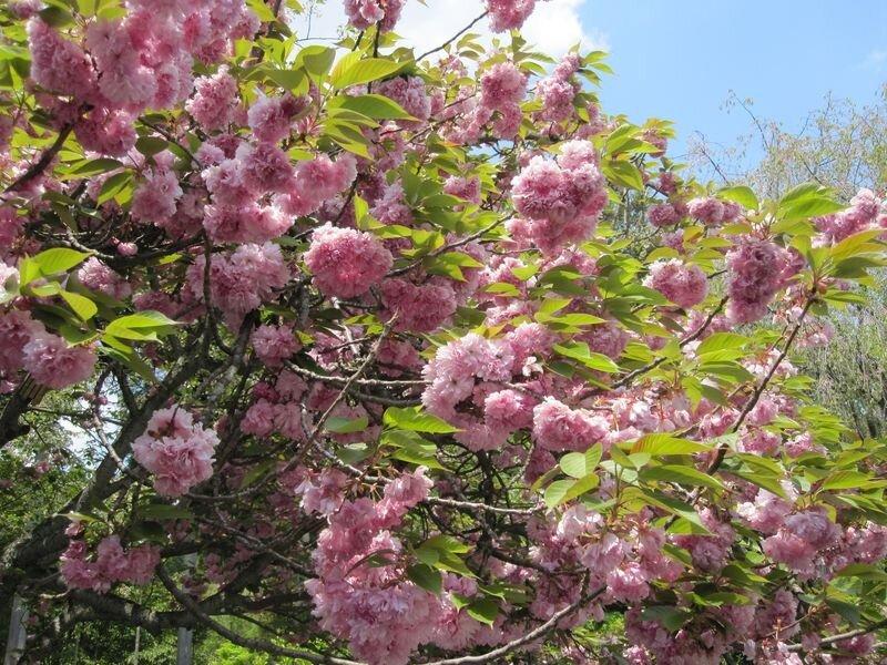 Japon 2010 070