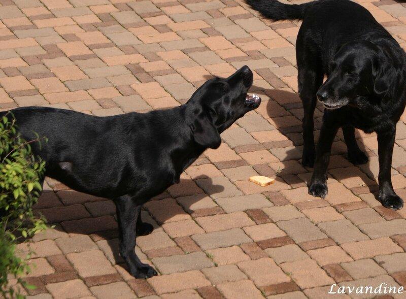 chiens 07 2008 (63)