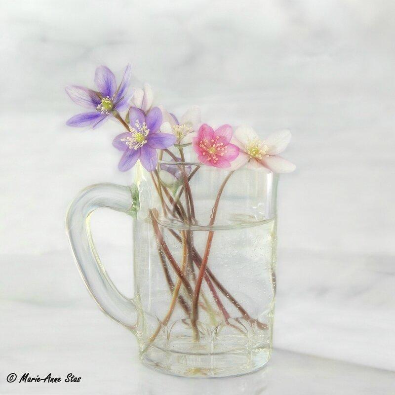 anemones blog