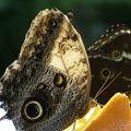 Butterfly_052408_28