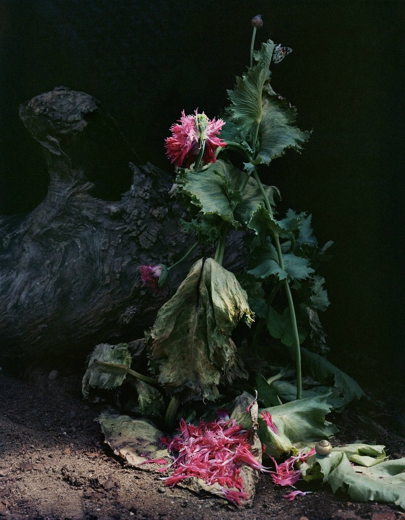 Sharon Core's Floral Still-Lifes That Recall Old Masters Paintings