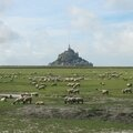 Mont Saint-Michel, moutons